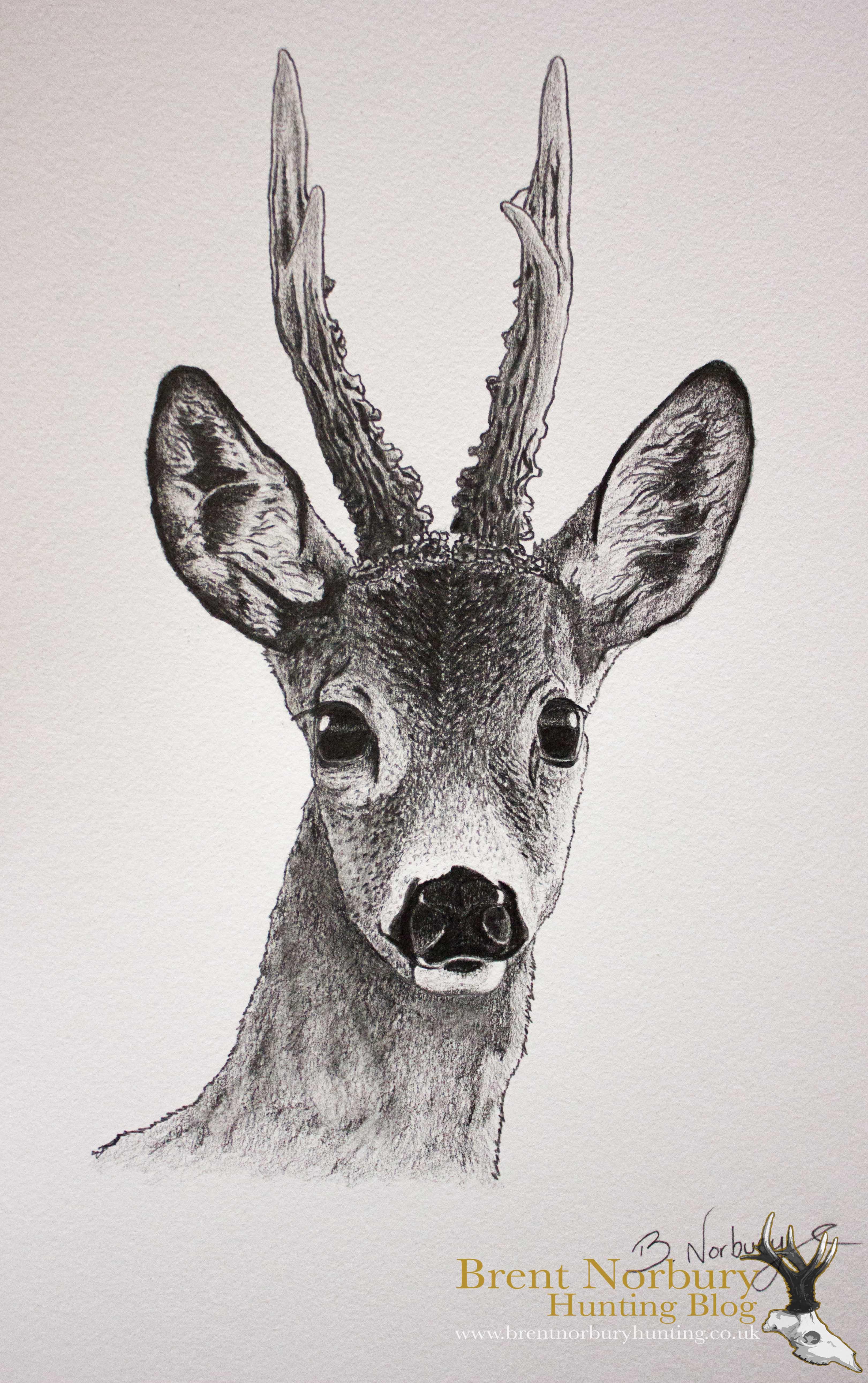 my hobby as a wildlife artist  u2013 brent norbury  u2013 borntohunt